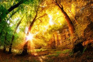 Magical forest scenery with a mix of summer and autumn colors and the sun shining through the leaves
